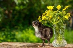 En liten svarthöna står på en trätabell med en vas av blommor med en naturlig grön bakgrund royaltyfri foto