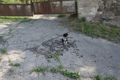 En liten tillfällig hund sitter på en bruten asfalt på bakgrunden av en skranglig metallport Arkivbilder