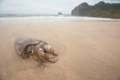 En liten tioarmad bläckfisk på stranden Royaltyfri Foto