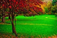 En liten tree med red låter vara på en bakgrund av gr royaltyfria bilder