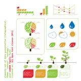 En liten uppsättning av infographic beståndsdelar för data som beskådar på ämnena av ekologi arkivbilder