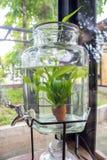 En liten växtkruka som visas i fönstret Arkivbilder