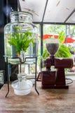 En liten växtkruka som visas i fönstret Royaltyfria Bilder