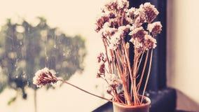 En liten v?xtkruka som visas i f?nstret Bukett av blommor nära fönster med gardinen royaltyfri bild