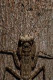 En liten varelse på trä Royaltyfri Bild
