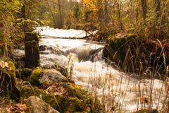 En liten vattenfall i en höstskog royaltyfria bilder