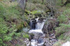 En liten vattenfall i skogen arkivfoto