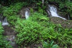 En liten vattenfall i skogen mycket av gröna träd royaltyfria foton