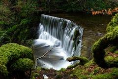 En liten vattennedgång i skogen Arkivbilder