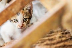 En liten vit katt som lyckligt spelar Fotografering för Bildbyråer