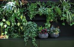 En livlig vägg mycket av växter för grönt hus royaltyfri foto