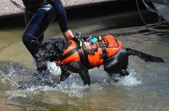 En livr?ddarehund fotografering för bildbyråer