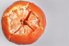En ljus apelsinrundatangerin i en tjock peel som klipps av från över, skymter av lobules Arkivbilder