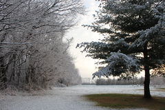 En ljus damning av snö Royaltyfri Fotografi