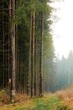 En ljus mist på kanten av skogen arkivfoton