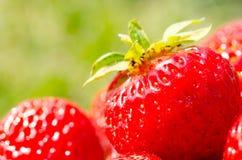 En ljus radda, är nya bär av en jordgubbe Royaltyfri Fotografi