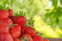En ljus radda, är nya bär av en jordgubbe Fotografering för Bildbyråer