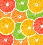 En ljus sammansättning av olika citrusfrukter över det hela fältet av ramen Apelsin grapefrukt, limefrukt royaltyfri illustrationer