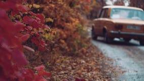 En los paseos del coche del bosque del oto?o almacen de metraje de vídeo
