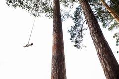En los pinos Imagen de archivo