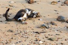 En lycklig älsklings- katt som spelar på en sandig strand Royaltyfri Bild
