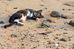En lycklig älsklings- katt som spelar på en sandig strand Arkivfoto