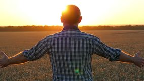 En lycklig ung bonde står i ett vetefält på solnedgången och lyfter hans händer Begreppet av jordbruk och affären arkivfilmer