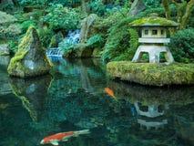 En lykta och en Koi i den Portland japanträdgården Arkivbilder
