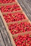 En mängd av nya läckra jordgubbar Arkivbild