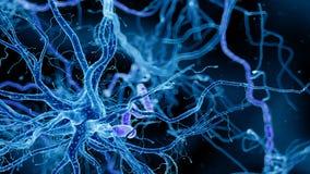 En mänsklig nervcell royaltyfri illustrationer