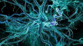 En mänsklig nervcell vektor illustrationer