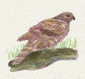 En målning av en örn i vattenfärg och färgpulver Målad hand Royaltyfria Foton