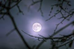 En måne som skiner i mitt av en mörk natt arkivfoton