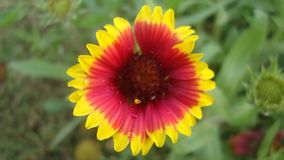 En mångfärgad blomma royaltyfri bild