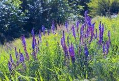 En mångfald av trädgårds- foto Trädgårds- foto Royaltyfri Foto