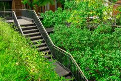 En mörk brun trätrappa med svart stål som railling bland gröna sidor av att krypa växten och träd bredvid en byggnad royaltyfria foton