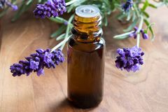 En mörk flaska av nödvändig olja för lavendel med ny lavendel Royaltyfria Bilder