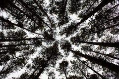 En madera del otoño Foto de archivo libre de regalías