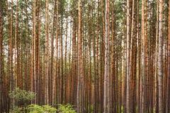 En madera del otoño Fotografía de archivo libre de regalías