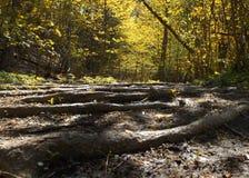 En magisk skog Arkivbilder