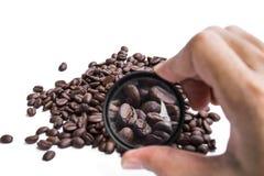 En magnifiant les grains de café rôtis, soustrayez le concept de choisi la qualité du produit de grains de café photographie stock libre de droits