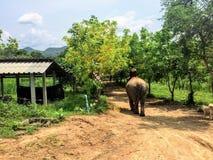 En mahout som förutom rider hans elefant till och med jordningen av ElephantsWorld Kanchanaburi Thailand arkivfoto