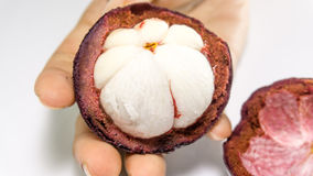 En main de mangoustan/mangoustan sur le blanc Images stock
