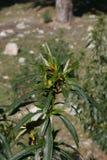 En makro för grön växt fotografering för bildbyråer