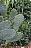 En makro som skjutas av ett kaktusblad royaltyfri foto