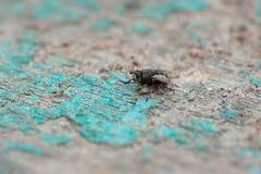 En makro som skjutas av fluga arkivfoto