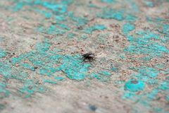 En makro som skjutas av fluga royaltyfria foton