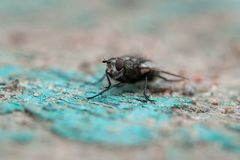 En makro som skjutas av fluga arkivbilder