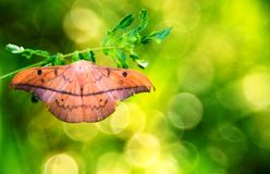 En mal på mimosagräsplanbladet royaltyfria bilder