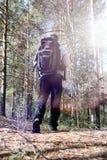 En man är en turist i en pinjeskog med en ryggsäck En fotvandra tr Arkivfoto